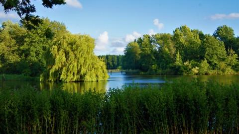 De natuur in Lelystad: groen en water