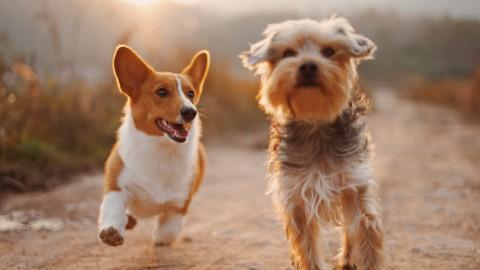 Waarom maken huisdieren je gelukkig?