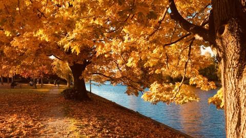 Vanaf vandaag is het officieel herfst