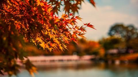 Maak doelen voor de herfst
