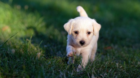 Gebitsverzorging van je hond