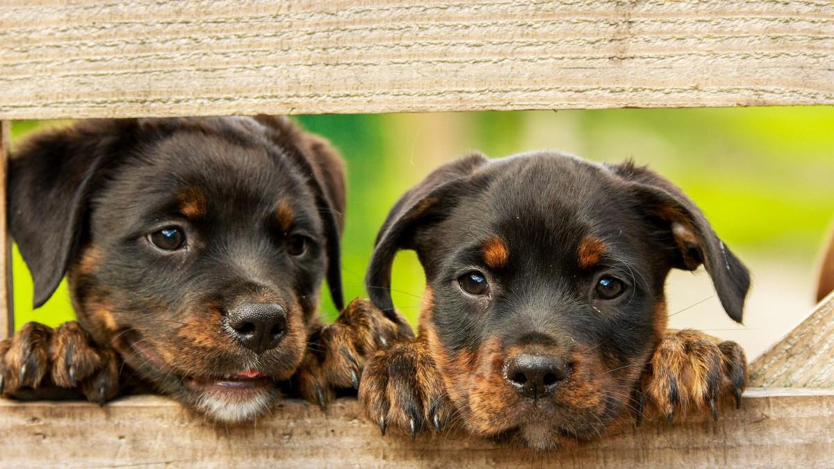 Bijna één op tien Nederlanders neemt huisdier in afgelopen jaar
