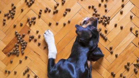 Start controle hondenbelasting