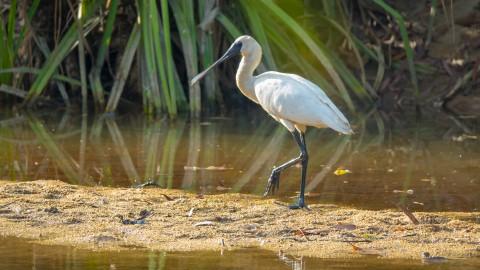 Nieuwe waterverbinding moet leefgebied voor water- en moerasvogels verbeteren