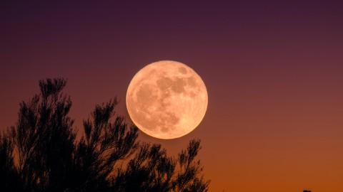 Full Moon Run Lely sur mère